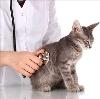 Ветеринарные клиники в Дуване